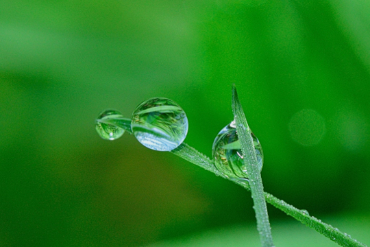 Gras waterdruppel