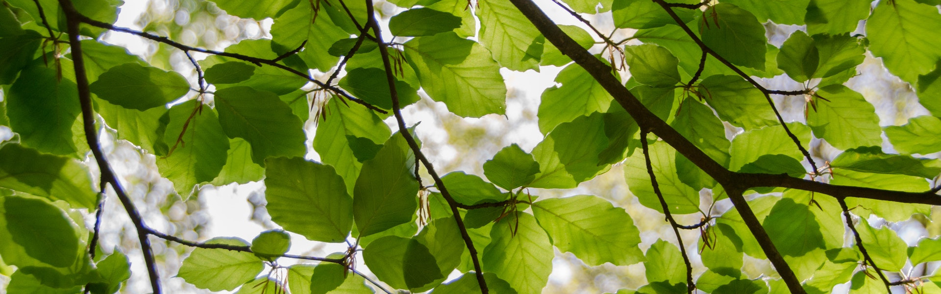 takken en bladeren
