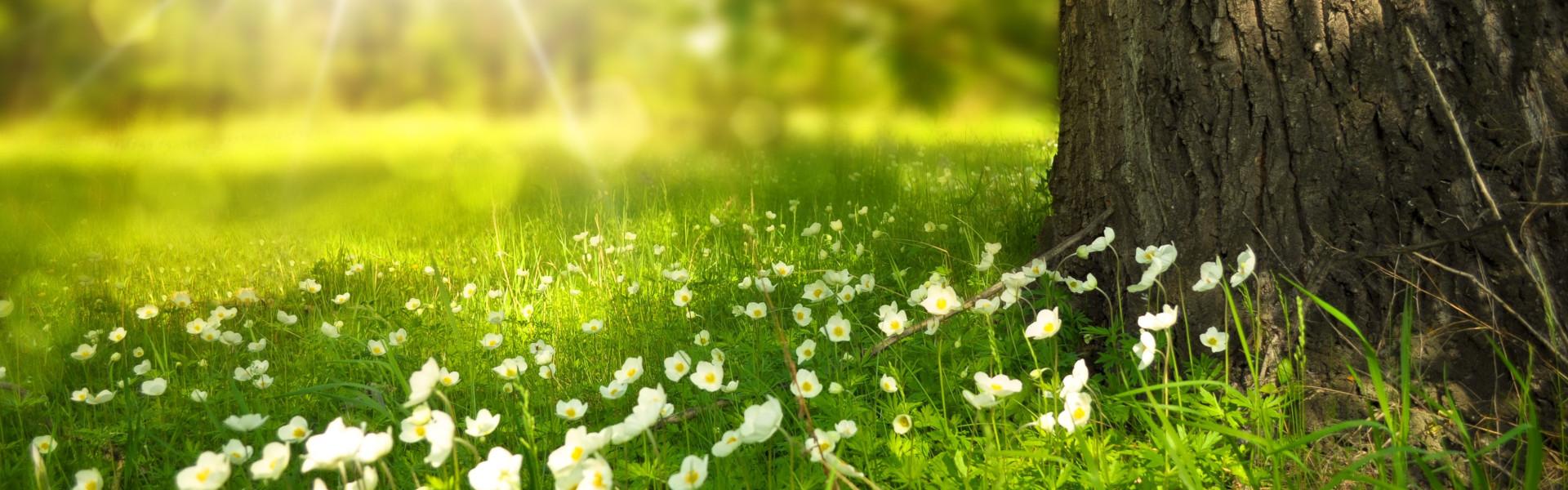 Bloemen grasveld